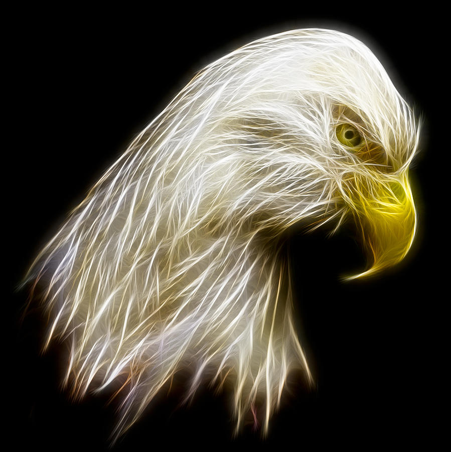 Abstract Photograph - Bald Eagle Fractal by Adam Romanowicz