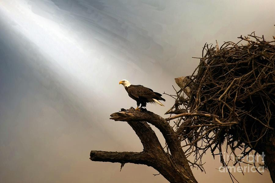Wildlife_bald Eagle In A Ray Of Light Photograph