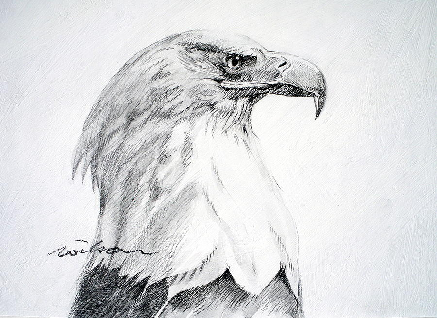 Bald Eagle Drawing - Bald Eagle by Ron Wilson