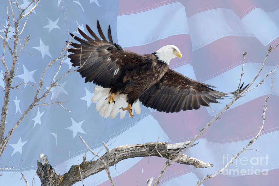 Flag Photograph - Bald Eagle Touch Of Pride by Lori Tordsen