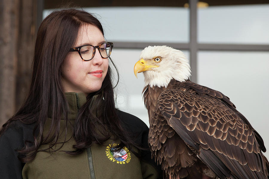 American Photograph - Bald Eagle With Handler by Jim West