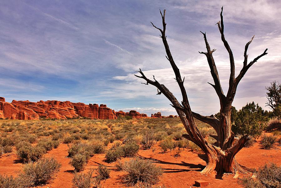 Landscape Photograph - Bald Tree At Arches  by Benjamin Yeager