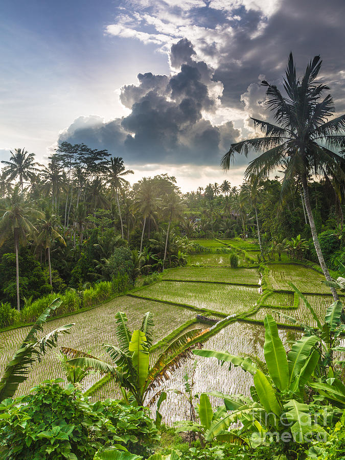 Indonesia Photograph - Bali Rice Terraces by Didier Marti