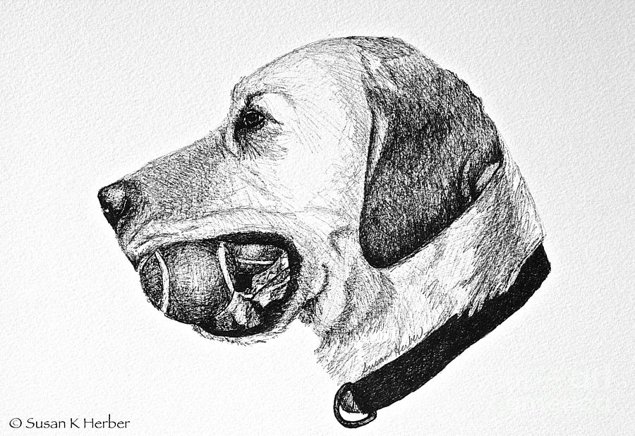 Lab Drawing - Ball Collector by Susan Herber
