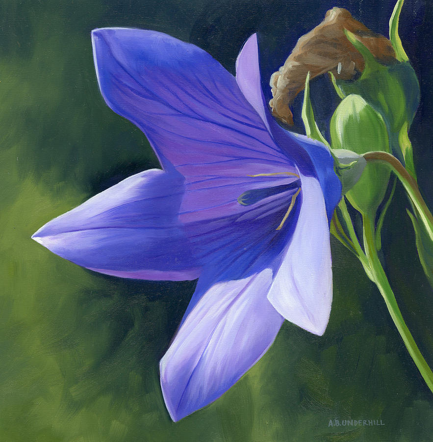 Flower Painting - Balloon Flower by Alecia Underhill