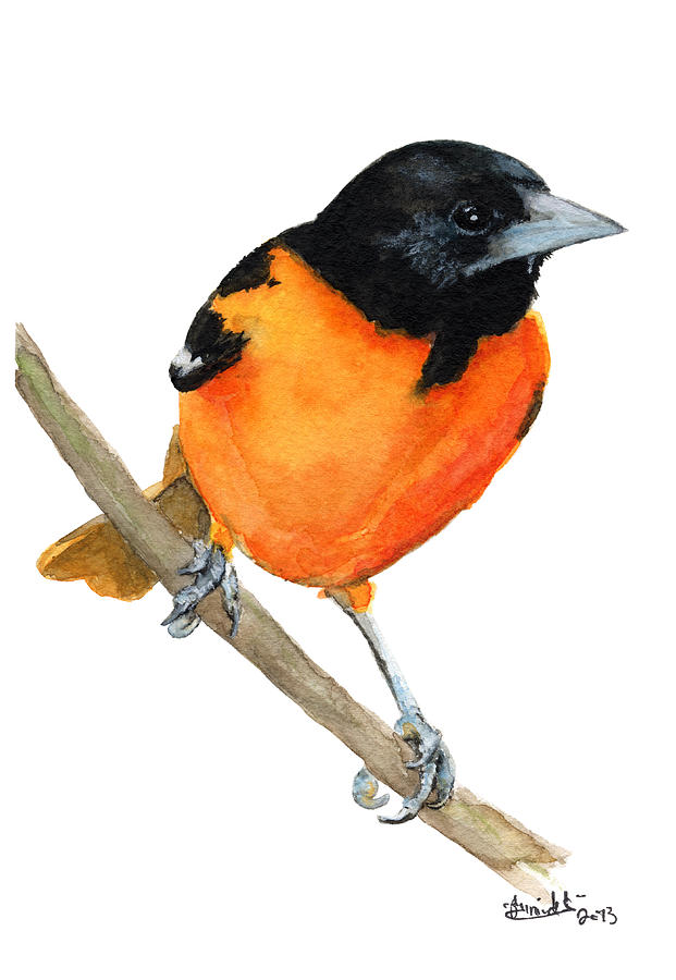 Baltimore Painting - Baltimore Oriole by Carlo Ghirardelli