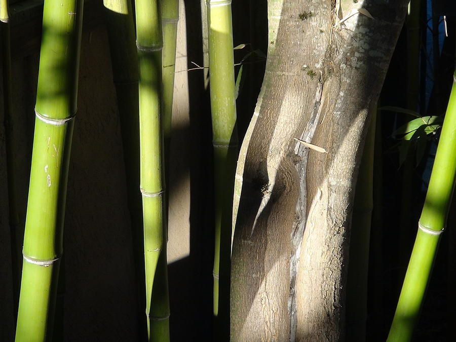 Bamboo Photograph - Bam  Boo  by Shawn Marlow