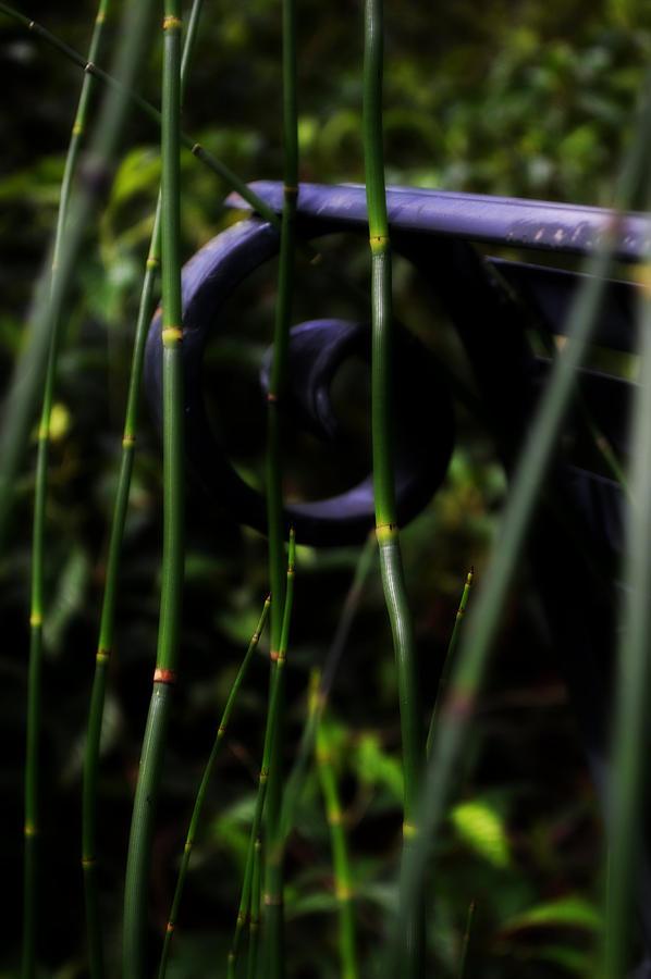 Macro Photograph - Bamboo And A Bench by Tara Miller