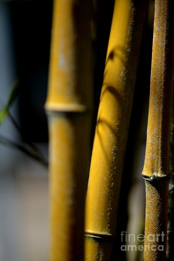 Bamboo Photograph by Beth Sanders