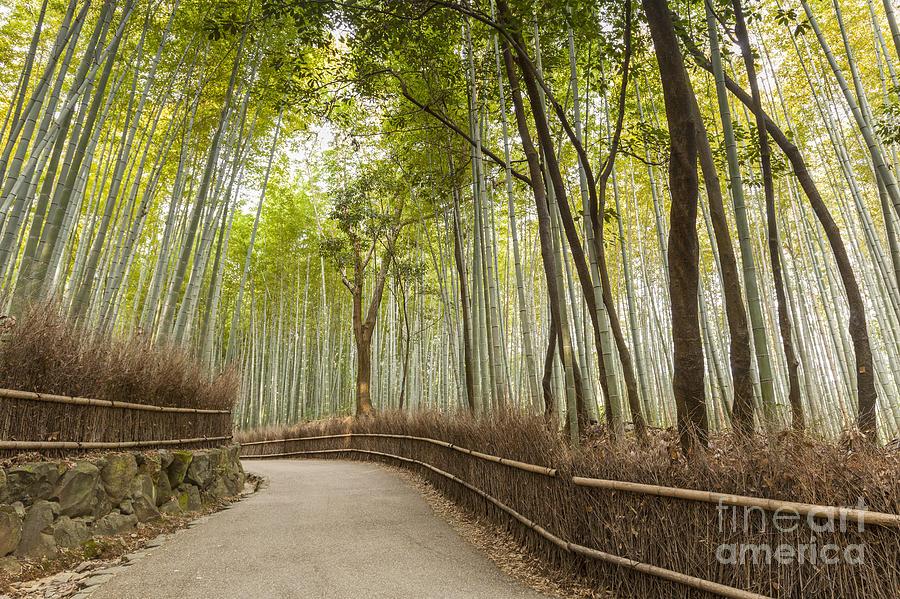 Arashiyama Photograph - Bamboo Forest Arashiyama Kyoto Japan by Colin and Linda McKie