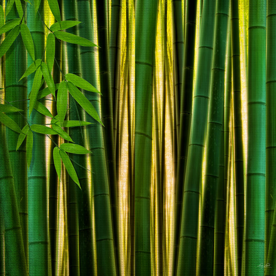 Bamboo Forest- Bamboo Artwork Digital Art by Lourry Legarde
