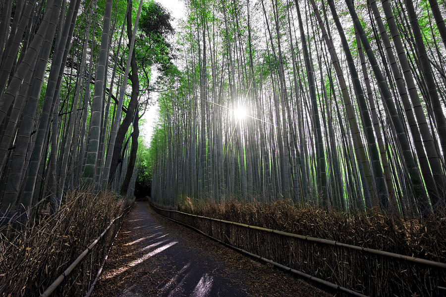 Bamboo Photograph - Bamboo Forest Path Of Kyoto by Daniel Hagerman