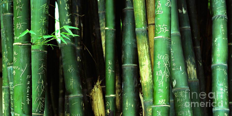 Bamboo Photograph - Bamboo Graffiti Pano - Sichuan Province by Anna Lisa Yoder