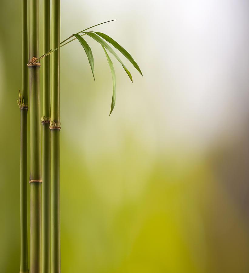 Bamboo Land Photograph by Pixhook