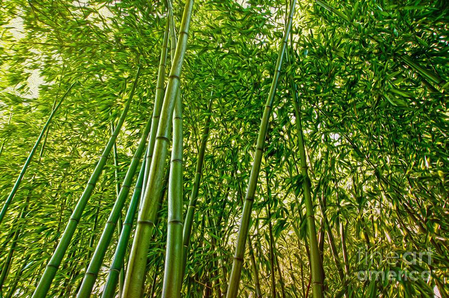 Bamboo Digital Art - Bamboo by Nur Roy