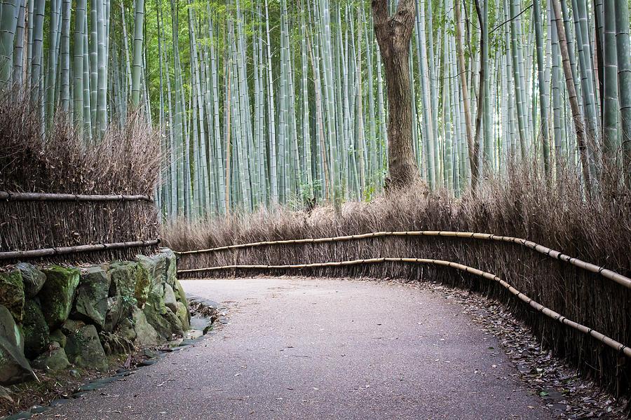 Bamboo Path by Christie Kowalski