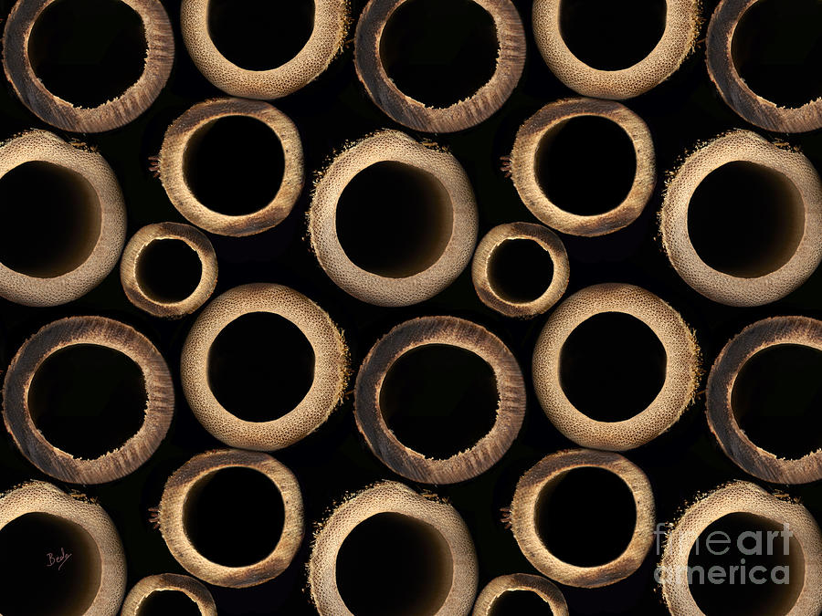 Bamboo Digital Art - Bamboo Rings by Bedros Awak