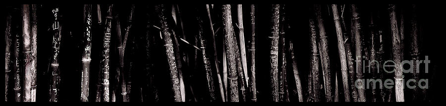 Bamboo Photograph by Ron Smith