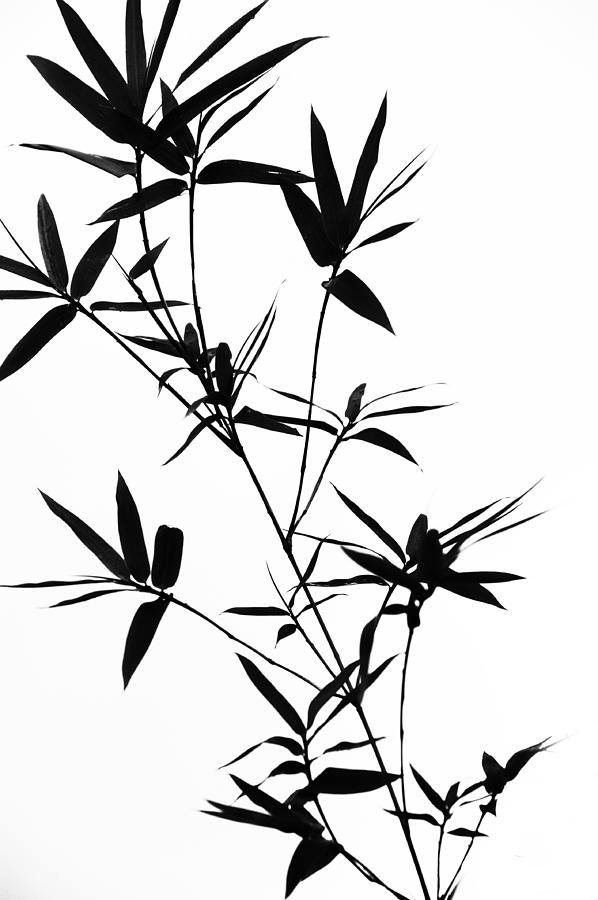 Black And White Photograph - Bamboo Shadows by Jenny Rainbow