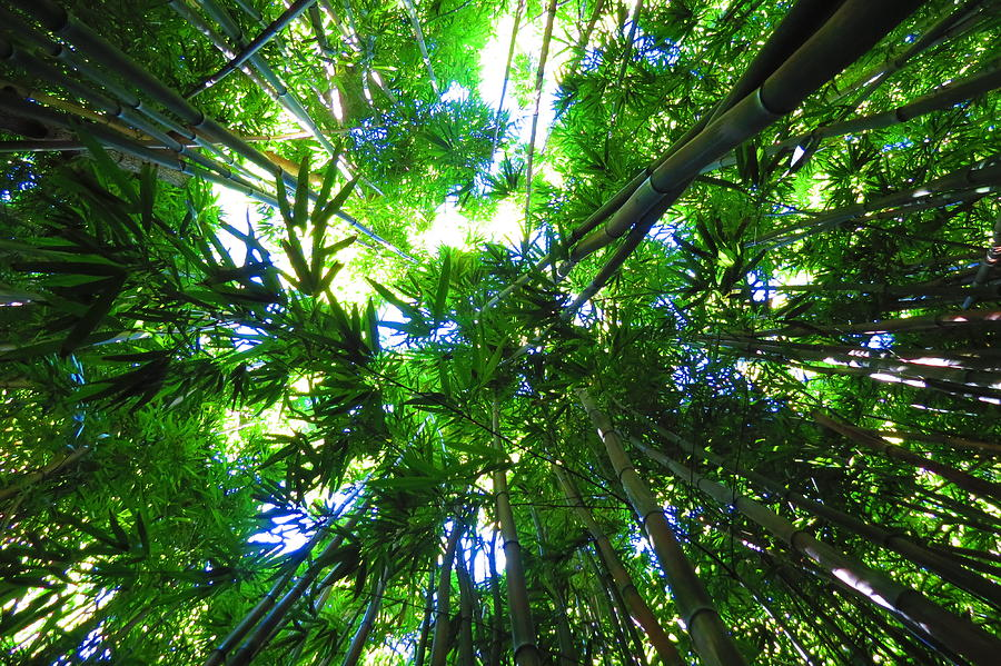 Bamboo Forest Photograph - Bamboo Skies  by Melanie Beckler