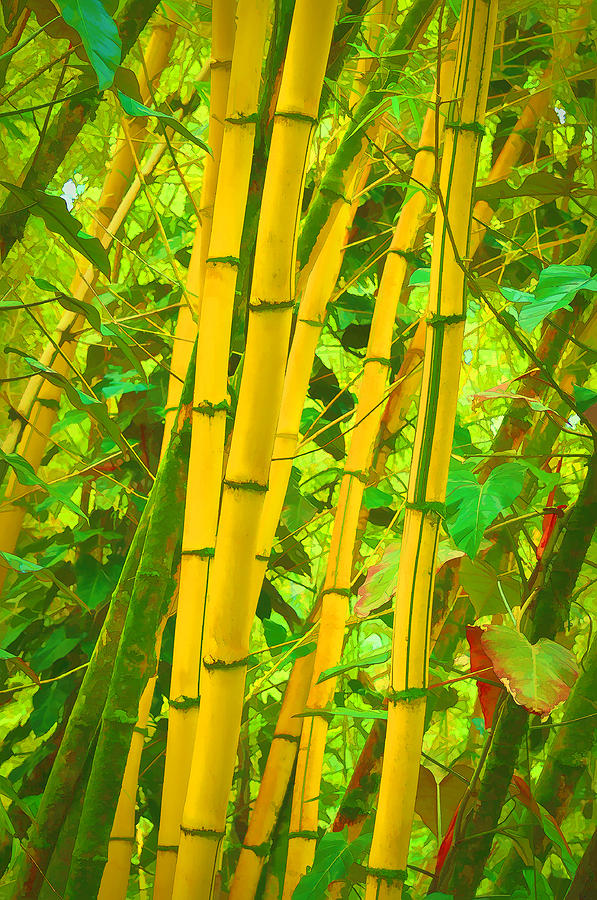 Bamboo Trees Photograph - Bamboo Trees by Art Brown