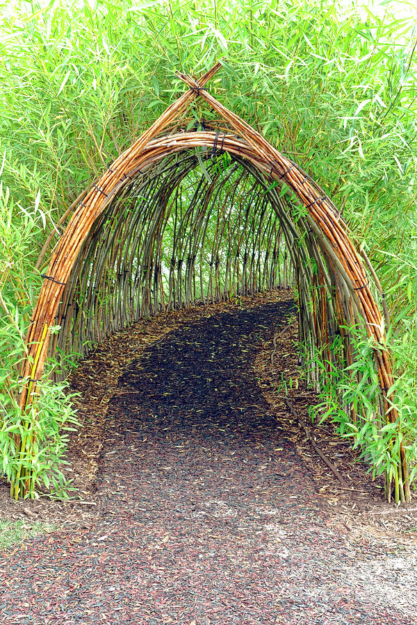 Bamboo Photograph - Bamboo Tunnel by Olivier Le Queinec