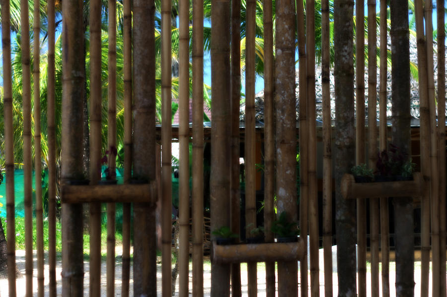 Bamboo Photograph - Bamboo View by Georgia Fowler