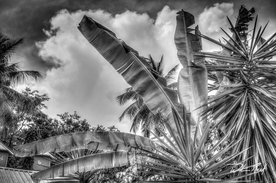 Banana Photograph - Banana Fan Bw by William Reek