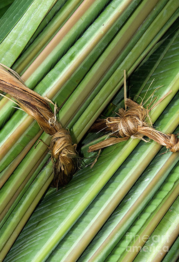 Roll Photograph - Banana Leaves by Rick Piper Photography