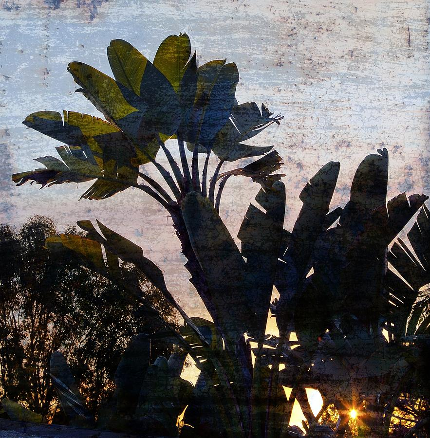 Landscape Photograph - Banana Palms by Gilbert Artiaga