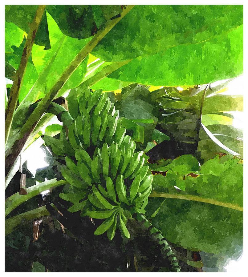 Banana Painting - Banana Trees by Lanjee Chee