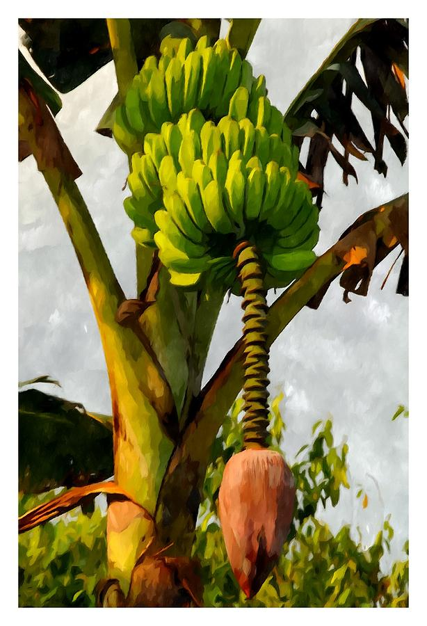 Banana Painting - Banana Trees With Fruits And Flower In Lush Tropical Garden by Lanjee Chee