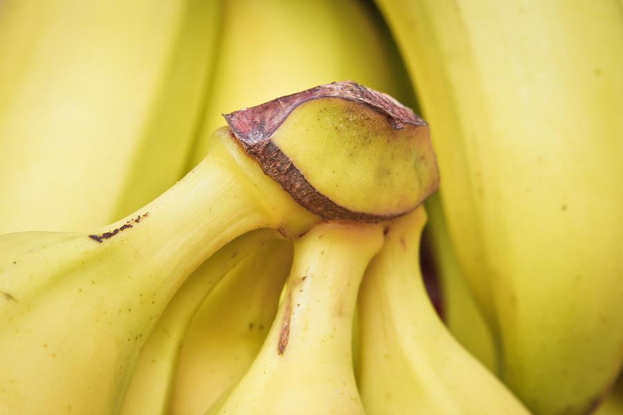 Bananas Photograph - Bananas by Tom Gowanlock