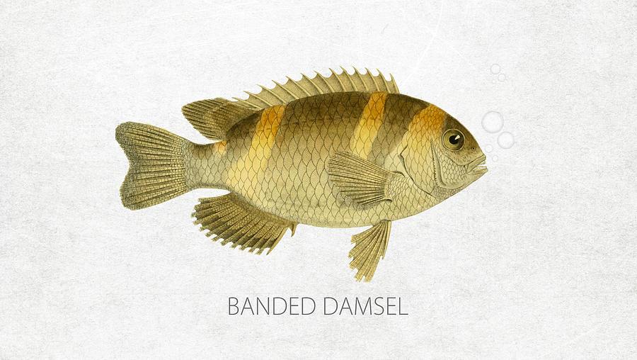 Banded Damsel Digital Art