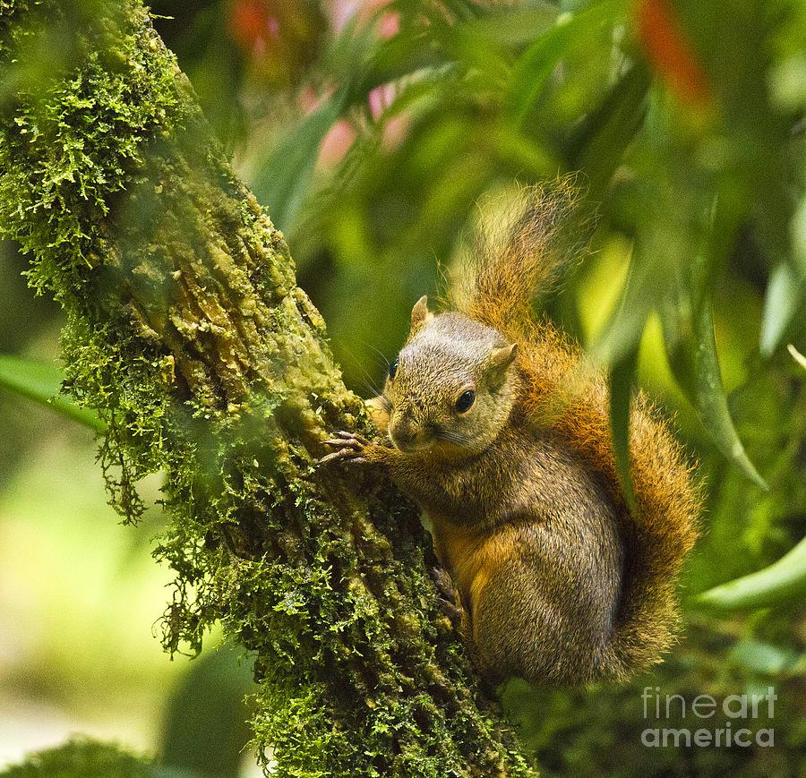 Bangs Mountain Squirrel II Photograph