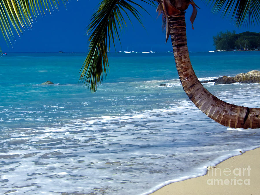 Barbados Photograph - Barbados Beauty by Sophie Vigneault
