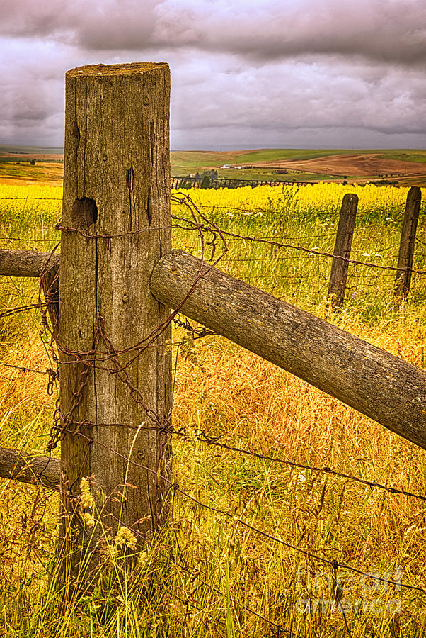 Barbed Wire On Fence Post Photograph By Priscilla Burgers
