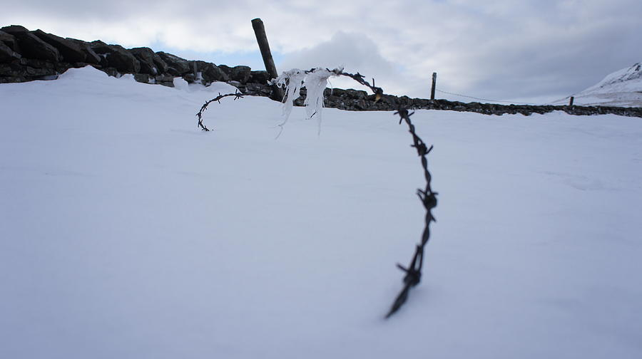 Wire Photograph - Barbed Wire by Riley Handforth