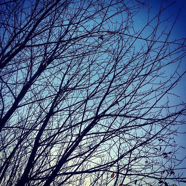 Squirrell Photograph - Bare Branches by Nic Squirrell