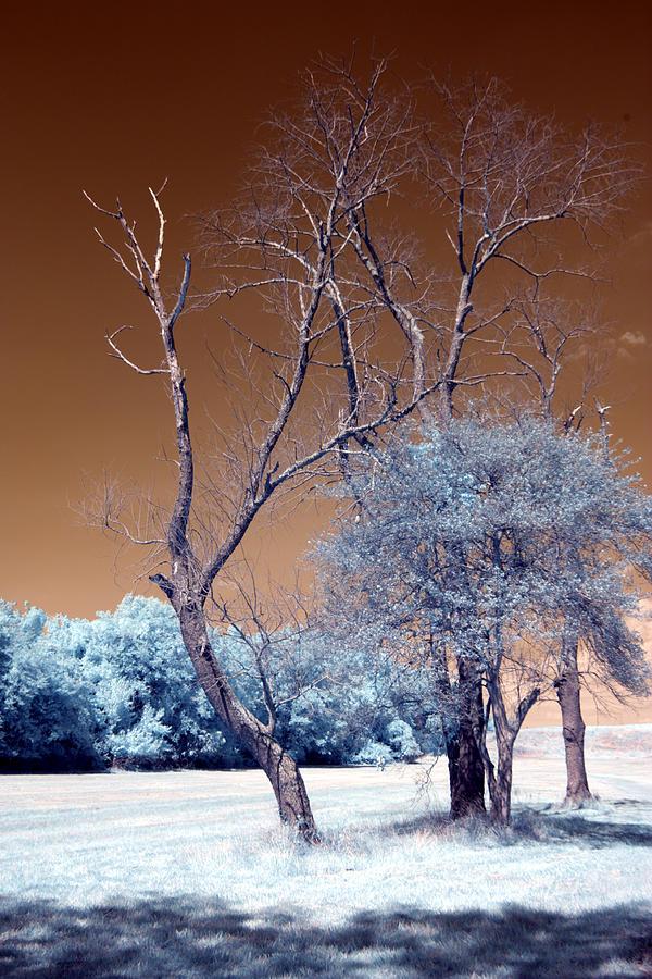 Infrared Photography Photograph - Bare Tree Cahokia by Bob Pomeroy