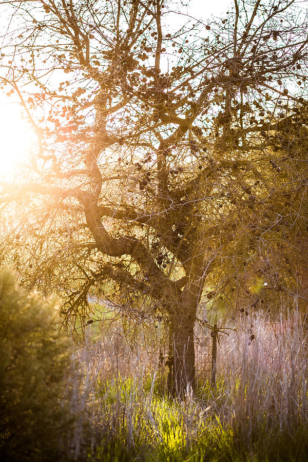 Bare Photograph - Bare Tree by Mike Lee