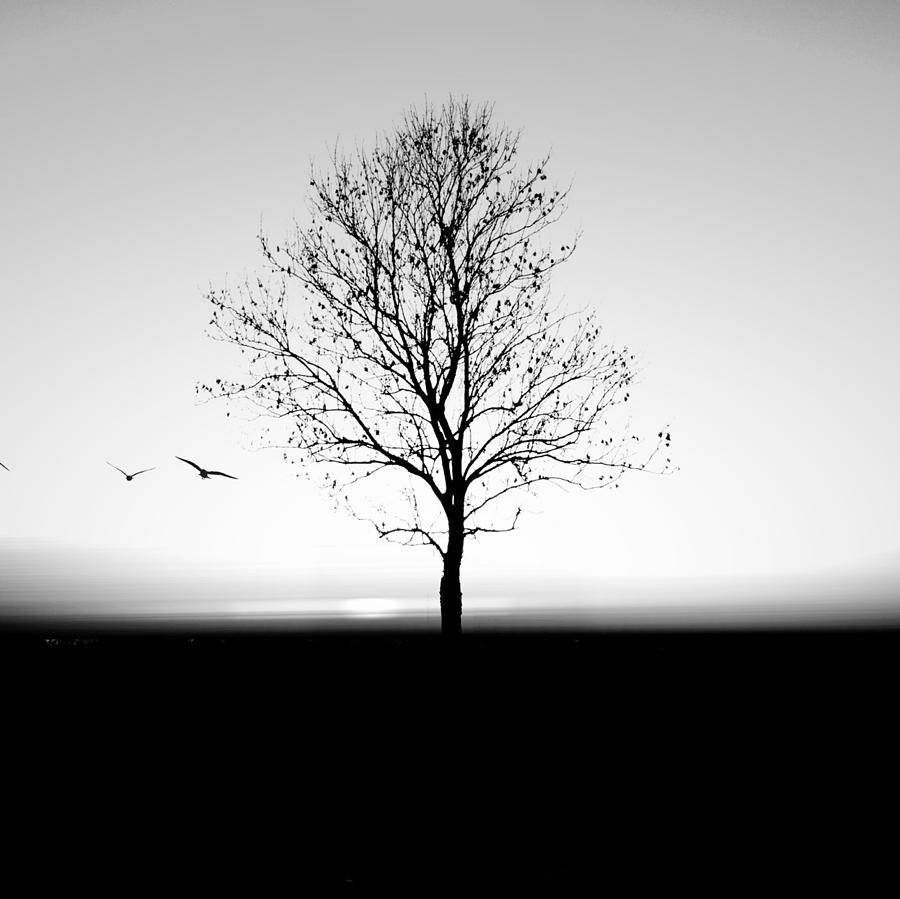 Bare Tree On Silhouette Field Against Photograph by Marc Stapel / Eyeem