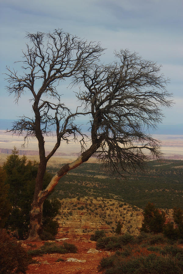 Bare Photograph - Bare Tree by Valerie Loop