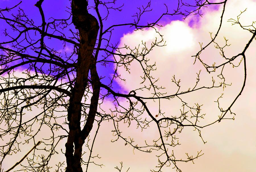 Tree Photograph - Bare Winter Branches by Michael Sokalski