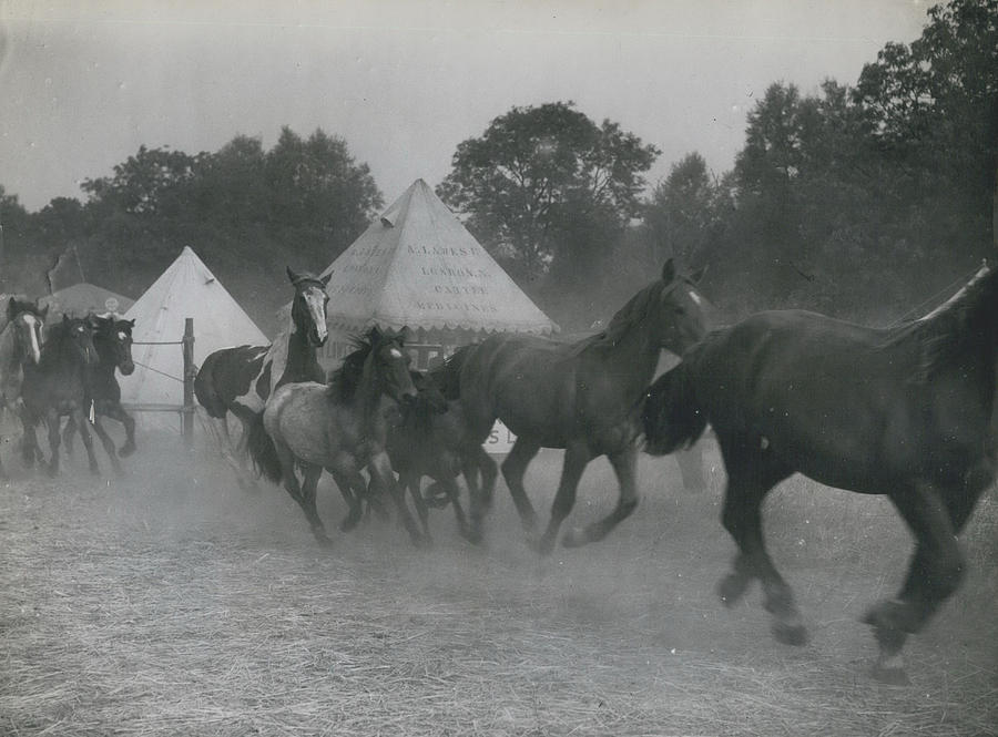 Retro Photograph - Baret�s 700 Years Old Cattle And Pleasure Fair Opens�� by Retro Images Archive