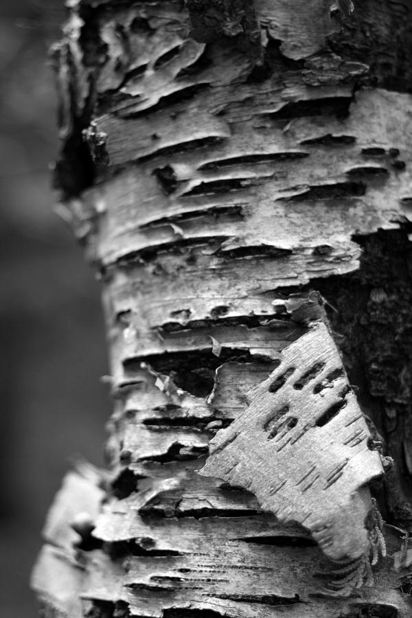 Bark Photograph - Bark by Brady D Hebert