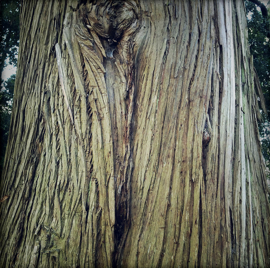 Tree Photograph - Bark by Les Cunliffe