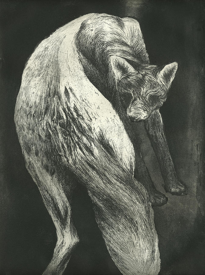Fox Drawing - Bark by Rebecca Bourke