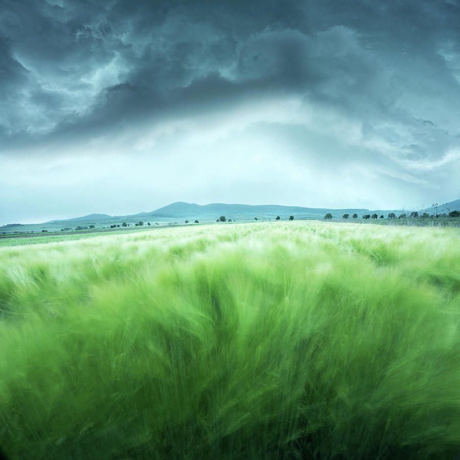 Landscape Photograph - Barley Field by Floriana Barbu