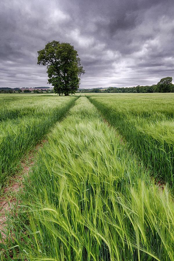 Barley Field, Nottinghamshire Photograph by Alex Baxter